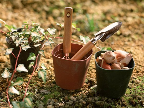 Starting a Garden or Orchard: Workload