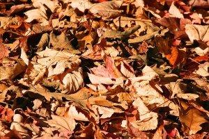 A Brief Guide to 13 Common Garden Mulches