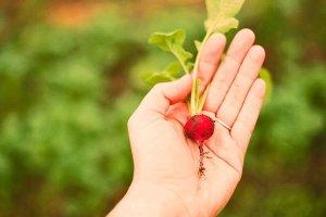 Top 10 Plants for Beginning Kitchen Gardeners