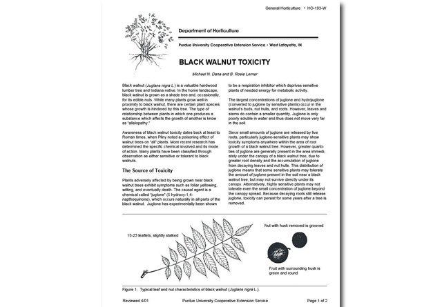 Black Walnut Toxicity