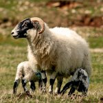 Adding Value to Wool