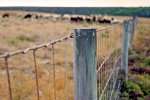 Getting Started with Livestock Part 2: Fencing & Facilities