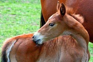The Breeding Toolbox: Linebreeding