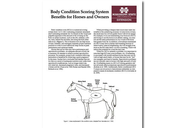Body Condition Scoring System Benefits for Horses and Owners