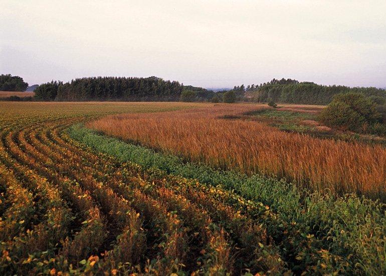 Prairie Strips in Field Crops