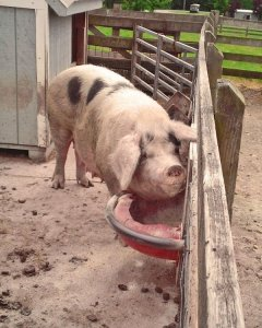 Getting Started with Livestock Part 3: Diet