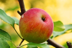 Scripture Passages of the Month: September 2015