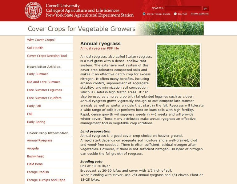 Cover Crops for Vegetable Growers