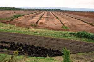 A Beginner's Guide to Peat Humus