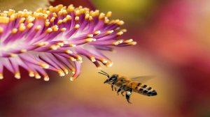 Challenges of Beekeeping in Kansas