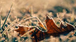Improving Your Garden Soil Over the Winter